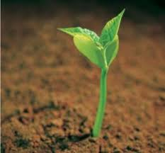 A seed  hope2